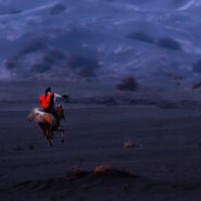 A horse in the Air