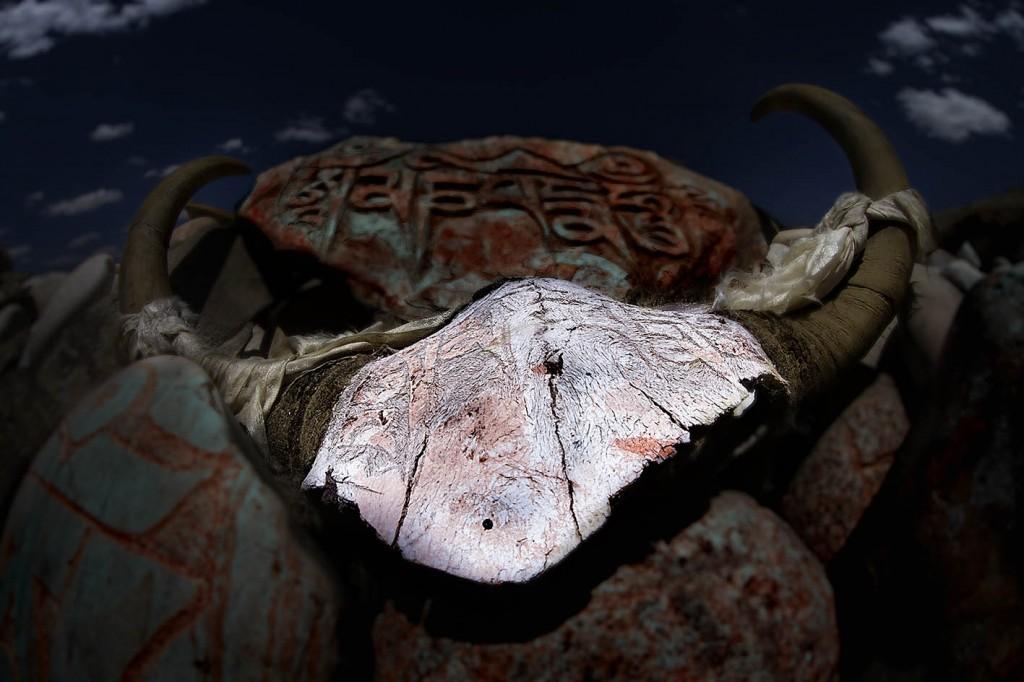 Yak skulls, Tibet
